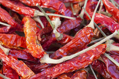 Sun Dried Red Thai Chilies. The organic chilies was growth, harvested and dried by natural light of sun in local of Thailand. That's become the important past of Royalty Free Stock Photography