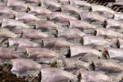Sun dried salid fish before cooking sell in the market in thaila Royalty Free Stock Photo