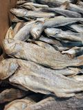 Sun-dried and salted fish Stock Photography