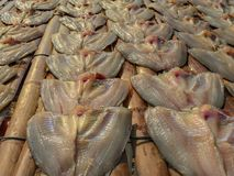 Sun dried salty preservation tilapia nile fish stock images