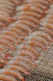 Sun-dried shrimp Stock Photography