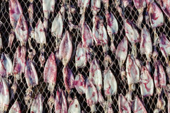 Sun Dried Squid. Dried Squid At The Fishing Farm Royalty Free Stock Photos