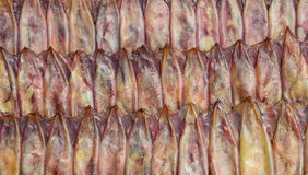 Sun dried squid Royalty Free Stock Image
