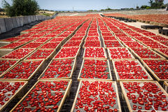 Sun Dried Tomatoes In Sicily Royalty Free Stock Photo