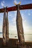 Sun dry of mackerel fish in prachuap khiri khan southern of thai Stock Image