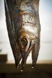 Sun dry mackerel fish in prachuap khiri khan southern of thailan Stock Photos