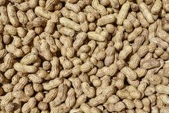 Sun drying peanuts, natural food background or pattern stock images