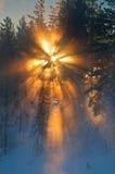 Sun durch Bäume Lizenzfreies Stockfoto