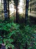 Sun durch die Bäume Stockfotos