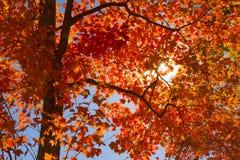 Sun durch Fallblätter Lizenzfreies Stockfoto