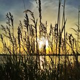 Sun durch Schilfe bei Sonnenuntergang Lizenzfreie Stockfotografie