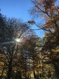 Sun durch Zweige Stockfotos