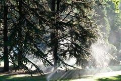 Sun e água em um parque Fotografia de Stock Royalty Free