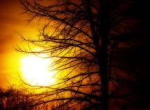 Sun e árvore Fotos de Stock Royalty Free