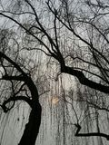 Sun e árvores imagens de stock royalty free