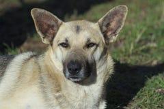 Sun e cane fotografie stock libere da diritti