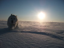 Sun e cane Immagine Stock Libera da Diritti