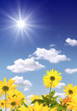 Sun e fiori Fotografie Stock