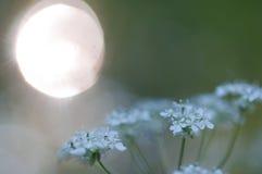 Sun e flor Fotografia de Stock Royalty Free