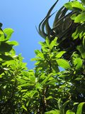 Sun e foglie Fotografia Stock Libera da Diritti