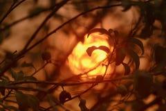 Sun e fumo Fotografia Stock Libera da Diritti