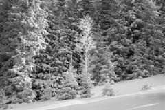 Sun e gelo nei Carpathians Fotografia Stock