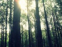 Sun e madeiras Fotografia de Stock Royalty Free
