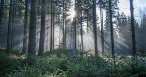 Sun e nebbia Fotografie Stock