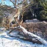 Sun e neve Fotos de Stock