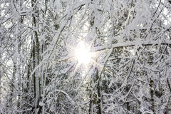 Sun e neve Fotografie Stock Libere da Diritti