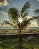 Sun e palma Fotografia Stock