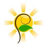 Sun e pianta Immagini Stock