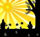 Sun e plantas Fotos de Stock