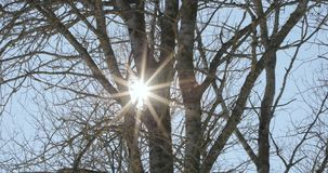 Sun e raios de luz através dos ramos secos das árvores vídeos de arquivo