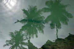 Sun e riflessione delle palme nell'acqua Fotografia Stock