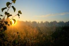 Sun e spiderweb Fotografia de Stock