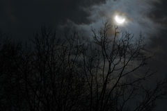 Sun eclipse and winter branches with cloudy sky Stock Photos