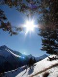 Sun ed alberi in montagne di inverno Fotografie Stock