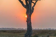 Sun ed albero Immagini Stock Libere da Diritti