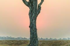 Sun ed albero Fotografia Stock