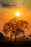 Sun ed albero Fotografia Stock Libera da Diritti