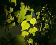 Sun ed ombra Immagini Stock
