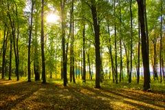 Sun ed ombre nel parco soleggiato di autunno Immagine Stock