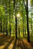 Sun ed ombre nel parco soleggiato di autunno Fotografia Stock Libera da Diritti