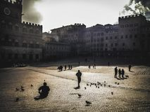 Sun ed uccelli a Siena fotografia stock