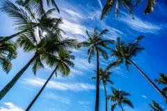 Sun in einem blauen Himmel, der durch die Palmenniederlassungen der Palmen glänzt Lizenzfreie Stockfotografie