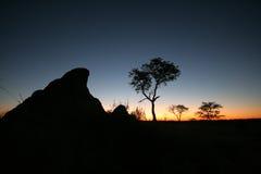 Sun-Einstellung über dem afrikanischen Busch Stockfotos