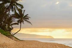 Sun-Einstellung über der gekrümmten Palme, dem Strand und den Wellen auf Sonnenuntergang-Strand, Hawaii stockfotografie