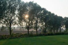 Sun-Einstellung hinter Bäumen Lizenzfreie Stockfotografie