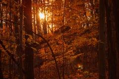 Sun-Einstellung im Holz während einer Wanderung an einem Herbsttag Stockfotos